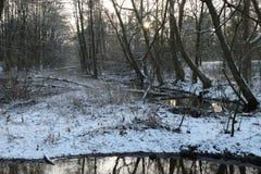 Bos met meer in de winter Stock Afbeelding