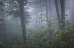 Bos met mist en bloemen in bloei stock foto's