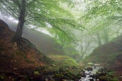 Bos met mist en een stroom stock foto