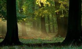 Bos met mist en warme zonneschijn Royalty-vrije Stock Afbeelding