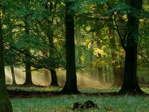 Bos met mist en warme zonneschijn royalty-vrije stock fotografie