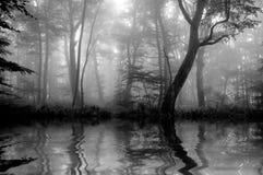 Bos met mist Het zwarte Bos van de Waaier, Australië, Victoria Stock Afbeeldingen
