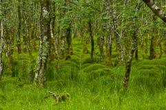 Bos met mos, Ierland Royalty-vrije Stock Foto's