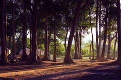 Bos met natuurlijk licht en hutten royalty-vrije stock afbeelding