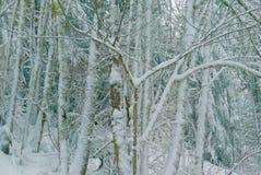 Bos met sneeuw op de bomen Stock Foto