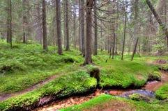 Bos met stroom Stock Afbeeldingen