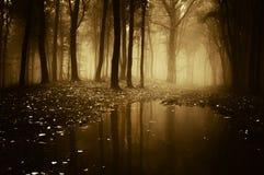 Bos met vijver in de herfst Stock Foto
