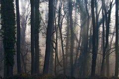Bos in mist Stock Afbeeldingen
