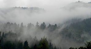 Bos in mist stock foto's