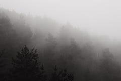 Bos in Mist royalty-vrije stock afbeelding