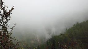 Bos in Mist De mist behandelt groene bomen, gras en helling Geleidelijk aan, wordt alles wit stock video