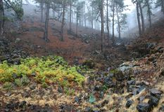 Bos mist na de regen, La Palma van de Canarische Eilanden Royalty-vrije Stock Fotografie