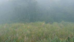 Bos in mistig regenachtig weer Dichte mist in hout stock video