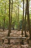 Bos nationaal park van Mafra Royalty-vrije Stock Fotografie
