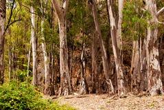 Bos in Nerja, een groot bos langs Rio Chillar Malaga, Spanje royalty-vrije stock fotografie