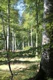 Bos in Normandië Stock Foto's