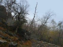 Bos onder Decinsky sneznik Royalty-vrije Stock Fotografie