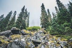 Bos op de berg royalty-vrije stock afbeeldingen