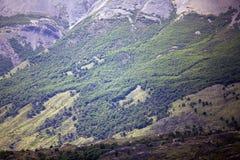 Bos op de helling van de bergmening van Argentino Lake, Argentinië royalty-vrije stock afbeelding