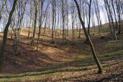 Bos op de heuvel Stock Fotografie