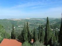 Bos op de heuvels van Jeruzalem stock footage