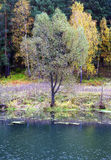 Bos op de kust Stock Foto's
