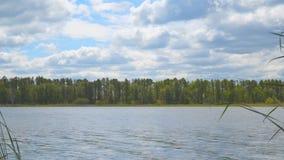 Bos op de kust van meer stock footage