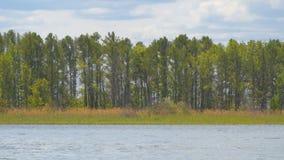 Bos op de kust van meer stock videobeelden