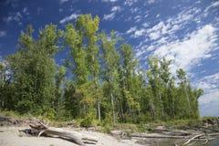 Bos op de rivieroever Royalty-vrije Stock Afbeelding