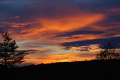 Bos op donkeroranje wolkenachtergrond Stock Afbeelding