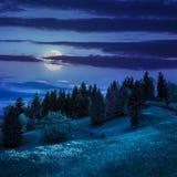Bos op hellingsweide in berg bij nacht Stock Afbeelding