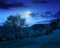 Bos op hellingsweide in berg bij nacht Stock Afbeeldingen