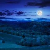 Bos op hellingsweide in berg bij nacht Royalty-vrije Stock Foto