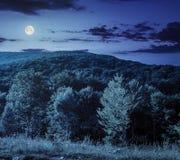 Bos op hellingsweide in berg bij nacht Stock Fotografie