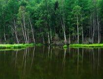 Bos op het meer Bomen in het water worden weerspiegeld dat Nevelige ochtend op het meer De vroege zomerochtend motregenende regen Stock Fotografie