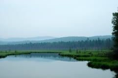 Bos op het meer Bomen in het water worden weerspiegeld dat Nevelige ochtend op het meer De vroege zomerochtend motregenende regen Stock Foto's