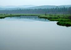 Bos op het meer Bomen in het water worden weerspiegeld dat Nevelige ochtend op het meer De vroege zomerochtend motregenende regen Royalty-vrije Stock Afbeelding
