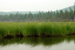 Bos op het meer Bomen in het water worden weerspiegeld dat Nevelige ochtend op het meer De vroege zomerochtend motregenende regen Stock Afbeelding