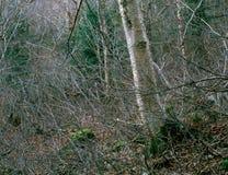 Bos op het Westen Royce Mountain, Baldface-Waaier, Wit Berg Nationaal Bos, New Hampshire stock foto
