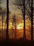 Bos op heuvel die van de vroege mistige achtergrond van de ochtendherfst wordt verhoogd. royalty-vrije stock fotografie