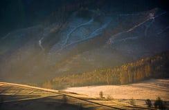 Bos op heuvel in gouden licht en nevel stock afbeeldingen