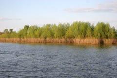 Bos op Oka riverbank in Murom, Rusland Royalty-vrije Stock Foto's