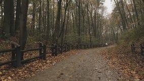 Bos/park de herfst na de regen en de onherkenbare mensen die op de achtergrond lopen Statisch Schot stock footage