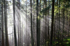 Bos in Polen Stock Fotografie