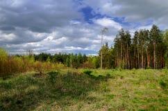 Bos in Polen Stock Afbeeldingen