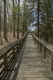 Forest Boardwalk Stock Afbeelding
