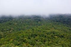 Bos in regenachtig seizoen van Thailand Royalty-vrije Stock Foto