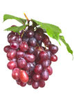 Bos rijpe, verse rode druiven met bladeren Royalty-vrije Stock Foto