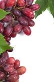 Bos rijpe, verse rode druiven met bladeren Stock Foto