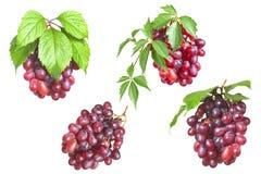 Bos rijpe, verse rode druiven met bladeren royalty-vrije stock afbeelding